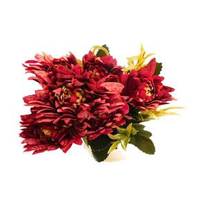 Chrysanthemum Flower Red