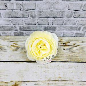 Big Cabbage Rose Cream