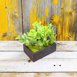 Green Buxus Leave