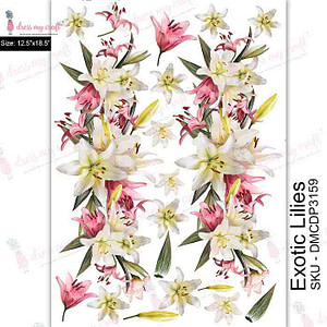 Exotic Lilies - Transfer Me