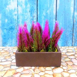 Asparagus Fern Dark Pink Shaded