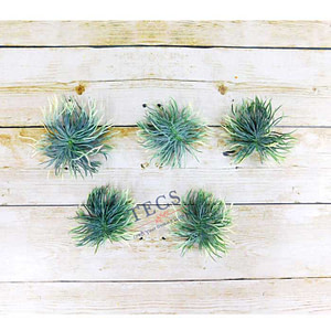 Green Shaded Air Plant